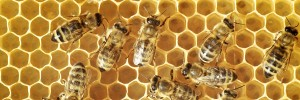The internet of things could save the honeybee from extinction