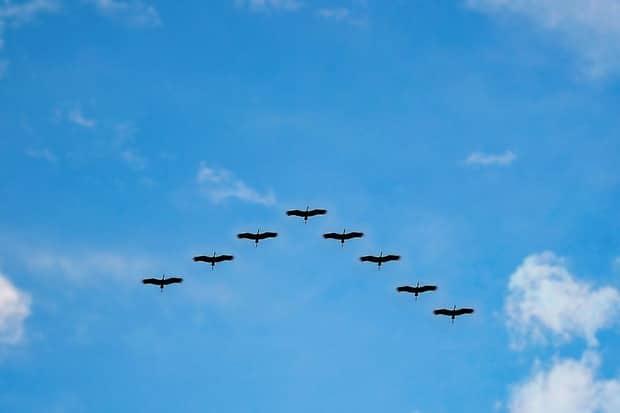 birds-migration-100588722-primary-idge