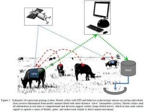 Big data in ranching and animal husbandry