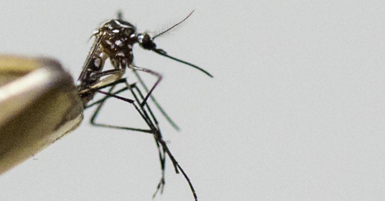 Can the smartphone cure Zika?