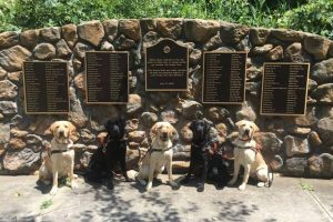 Big data for guide dogs. IBM helps train service dogs