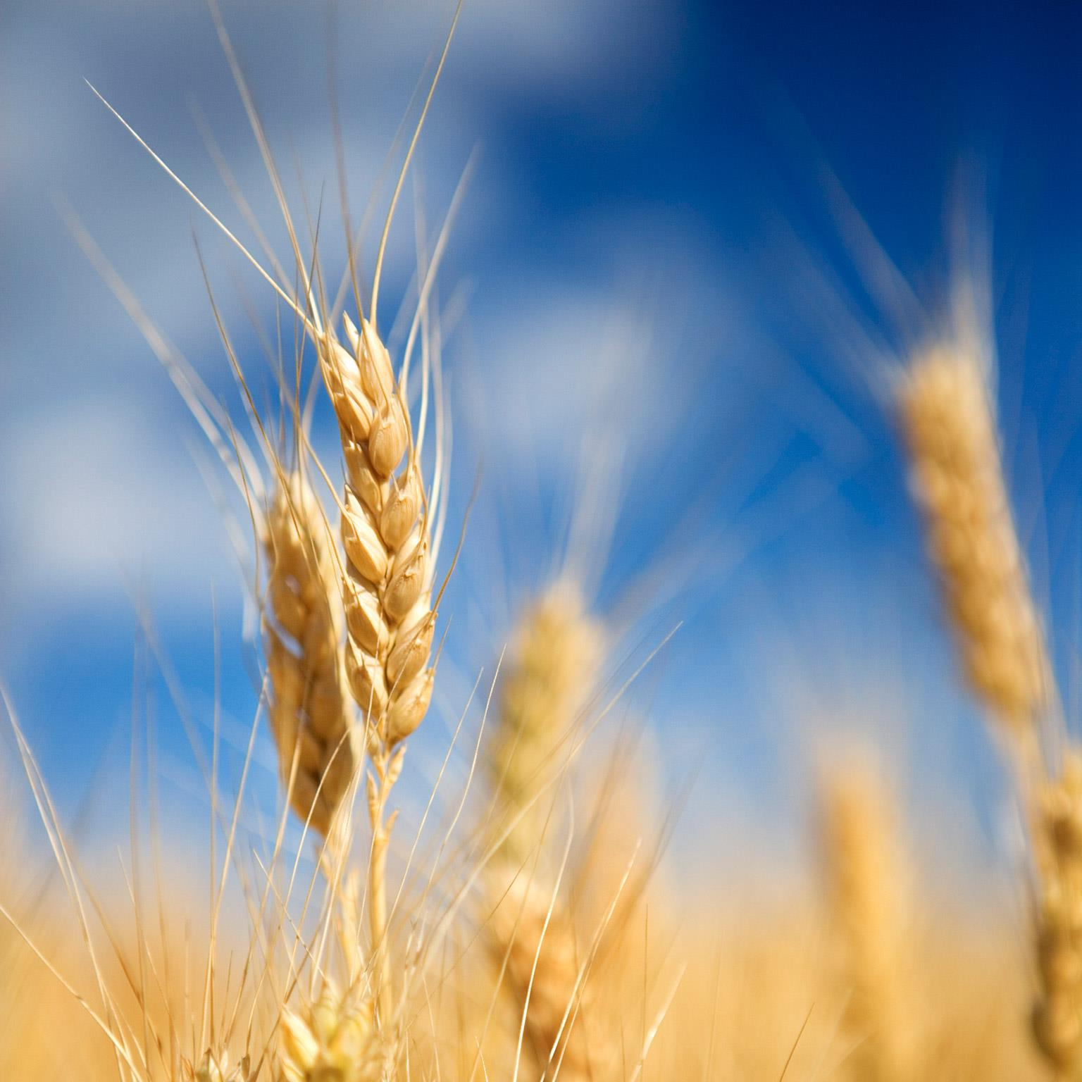 How big data will revolutionize the global food chain