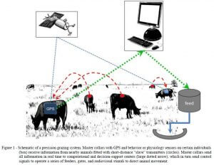 Big data in ranching and animal husbandry