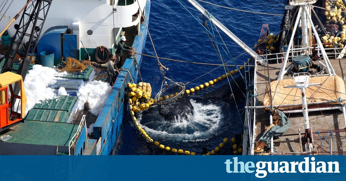 The latest weapon in the fight against illegal fishing? Artificial intelligence